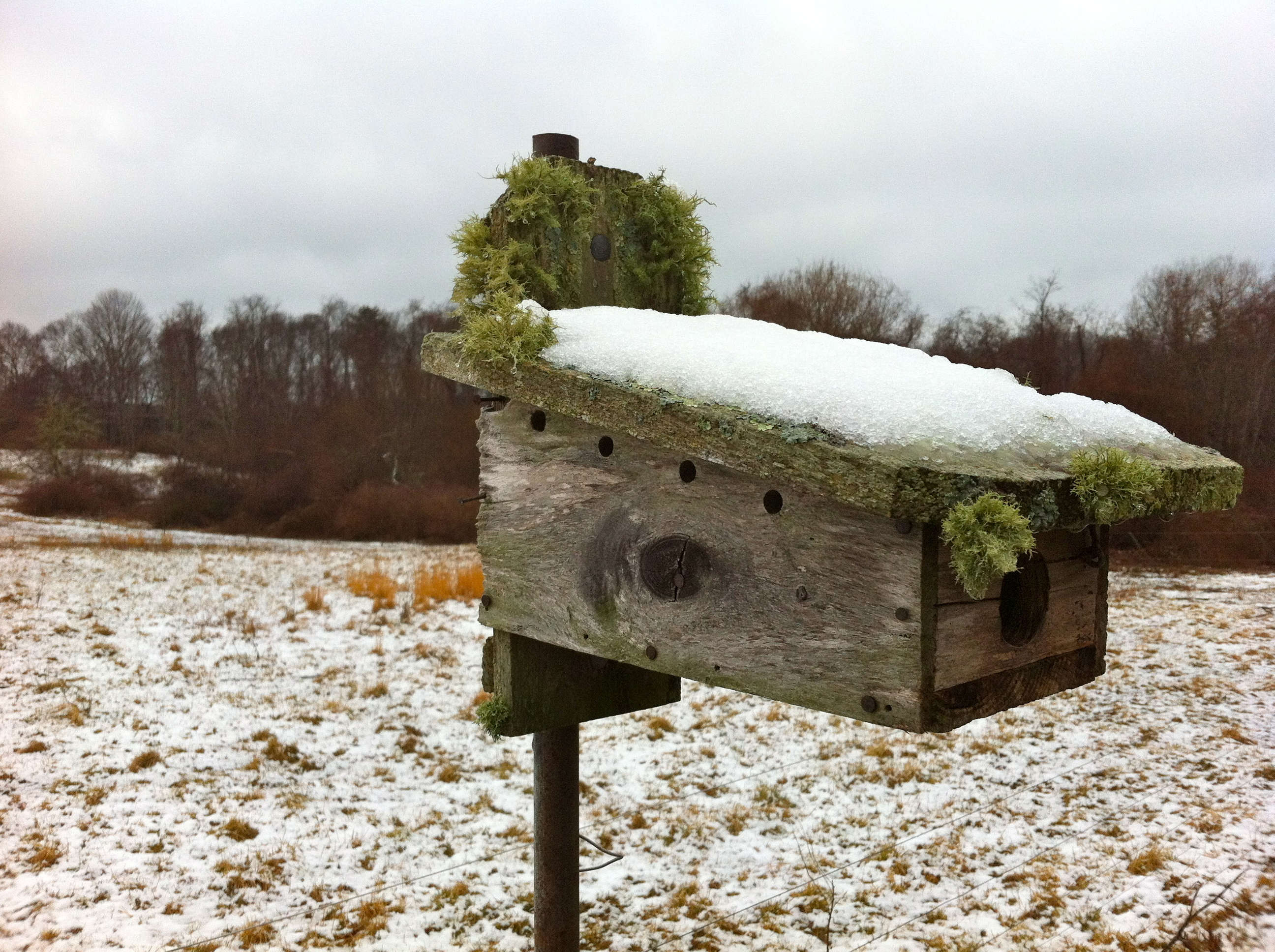 Peterson Farm, birdhouse, winter