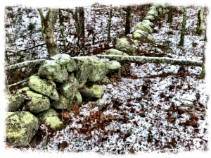 Lichen covered stone wall in snow, New England.